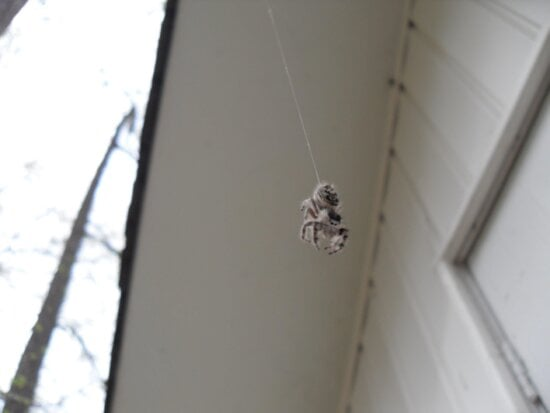 hanging, spider, wall