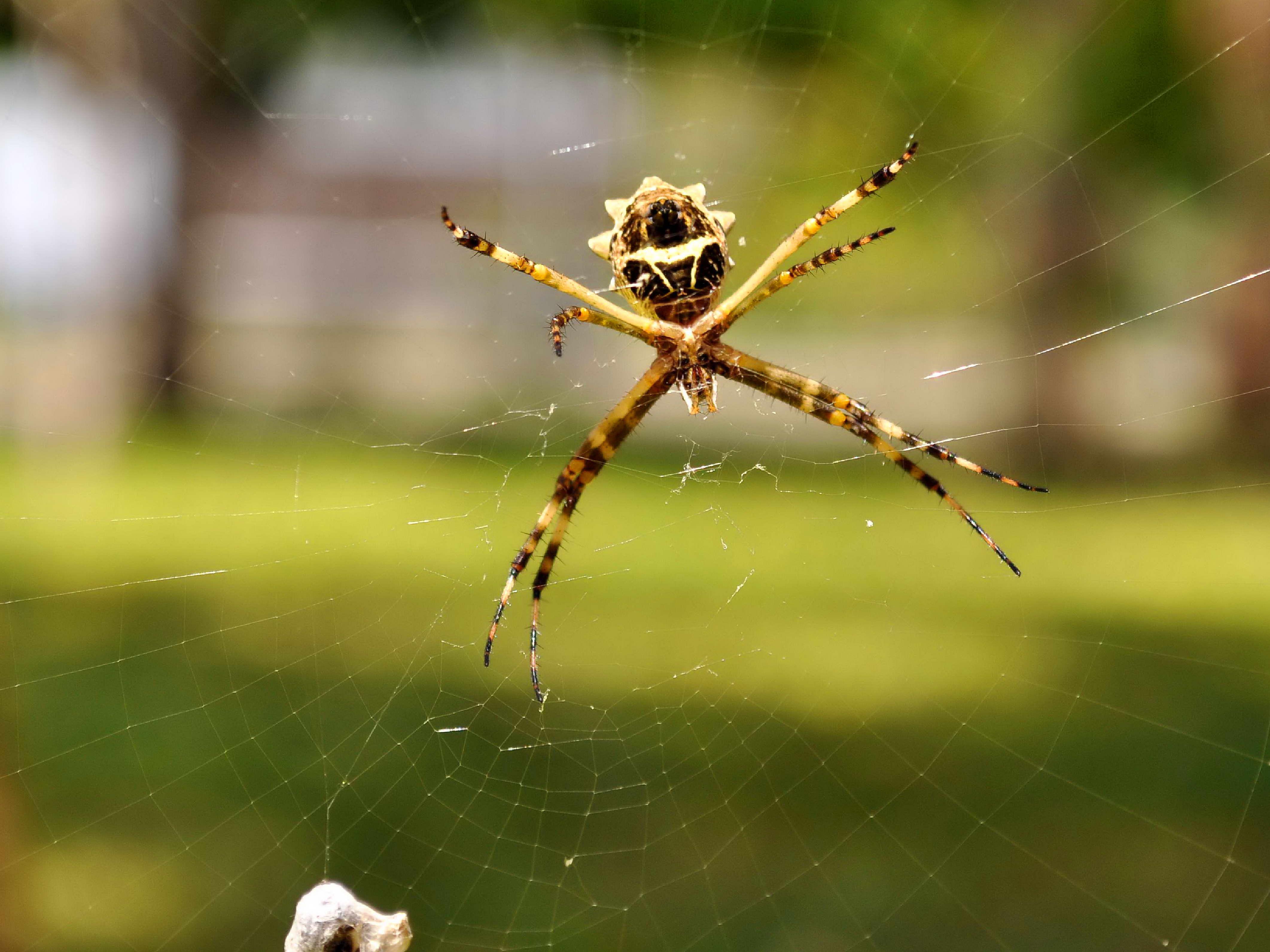 Free photograph; spider, net, close