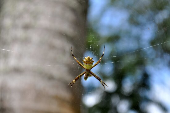 spider, insect, net