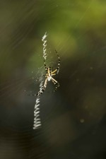 spider, spins, web
