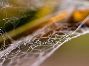 spider, webs