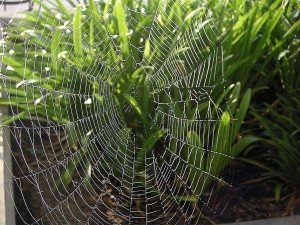 spiderweb, covered, dew, morning