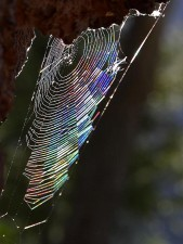 spiderwebs, raindow แสง