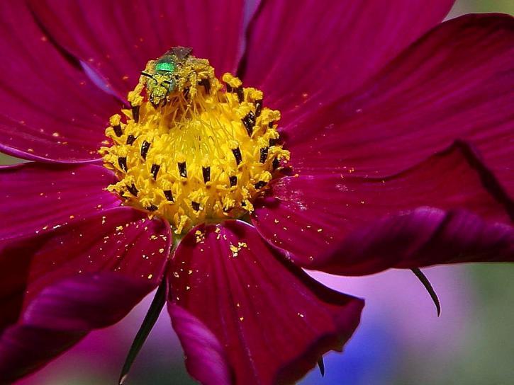 extraño, grren, insecto, flor