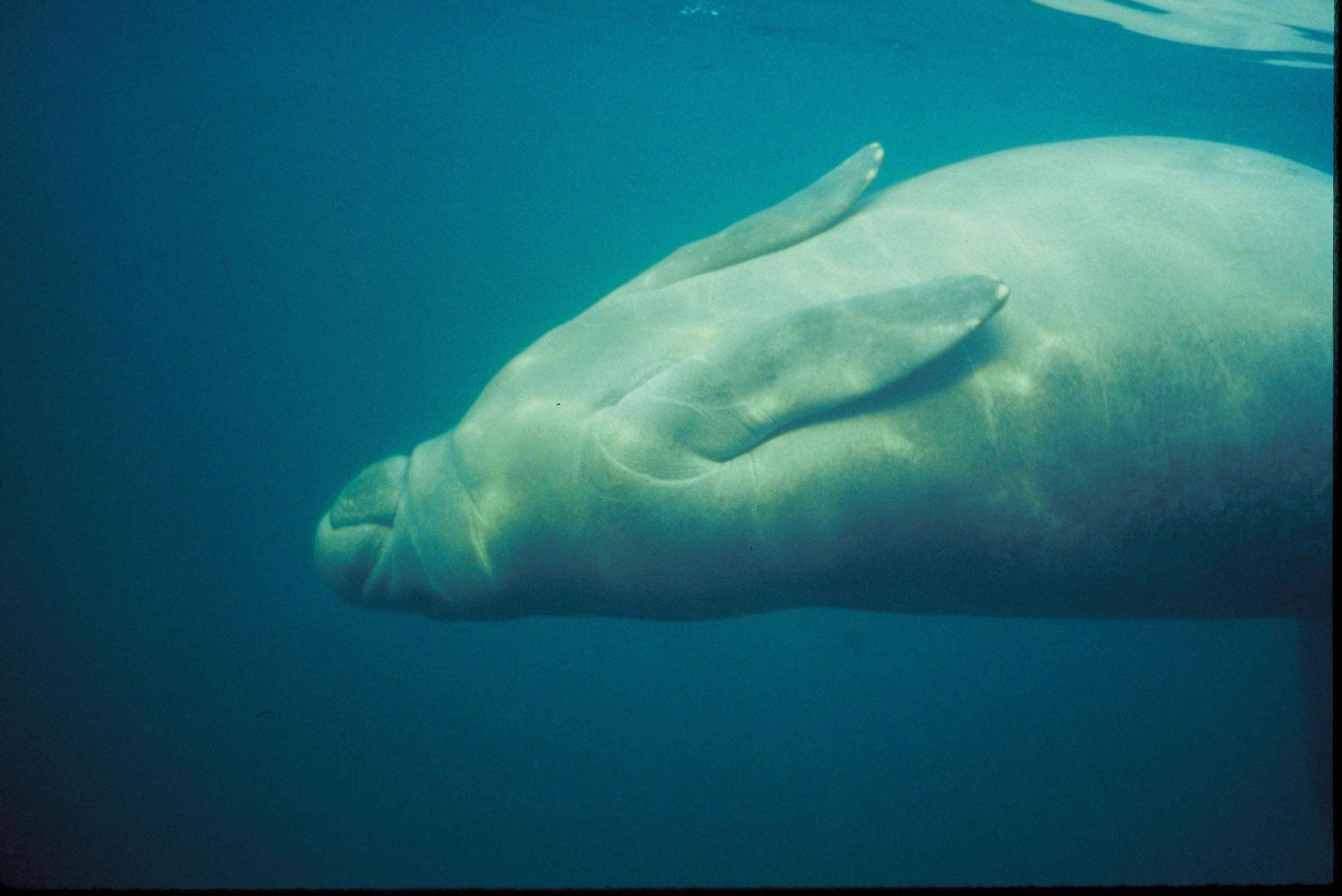 52 Gambar Hewan Mamalia Laut HD Terbaik