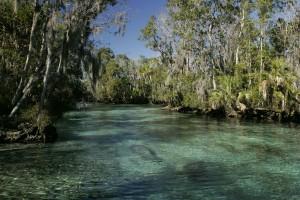 Tropical, biotopov, prírodných, prostredie, manatee, cicavce