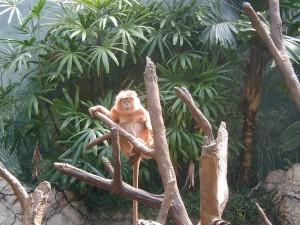 Monyet lucu,