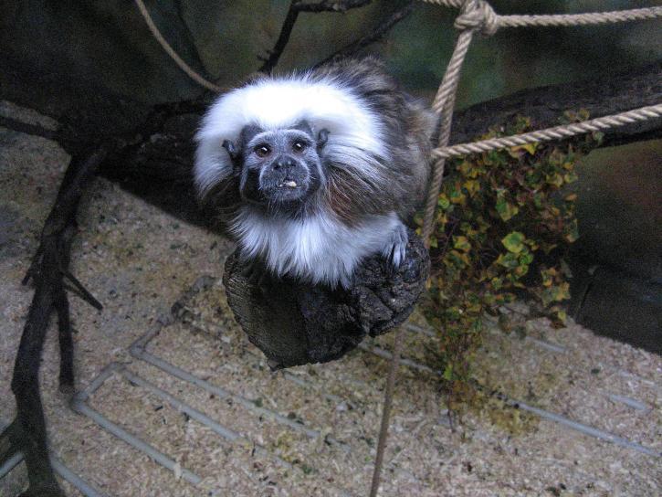 маймуна гора