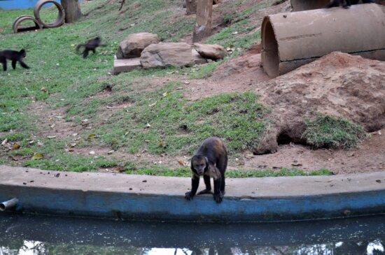 monkey, bank, pool