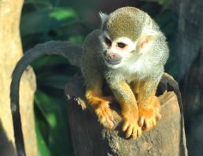 sweet, monkey, face
