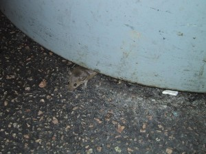 mouse, trashcan