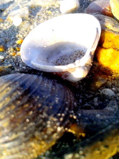 Süßwasser, Muscheln, Fluss