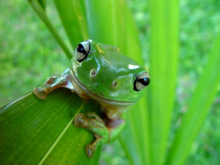 candid, frog