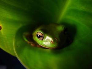 frog, animal