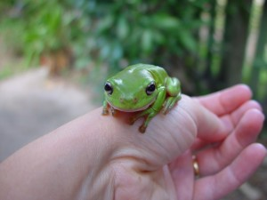 green, frog, hand