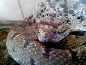 Szczegóły, węża i głowicy, obraz ciała