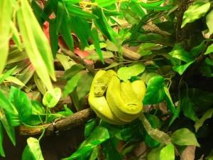 vert, arbre, python, serpent
