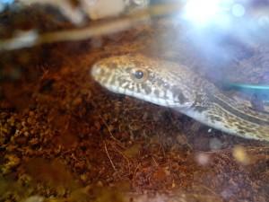 head, snake, terrarium