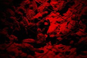 Baby, kareta obecná, želvy, červená, světlo, Foto