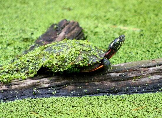 Gemalte Schildkröten