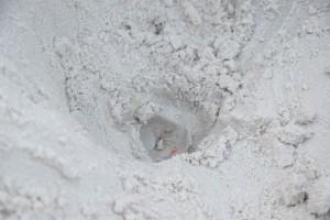 zee, schildpad, ei, holl, zand
