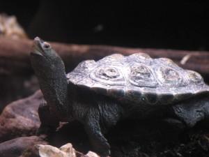 tortue, terrarium