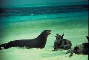 phoque moine hawaïen, animal, mer, plage
