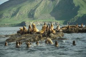 sea, lions