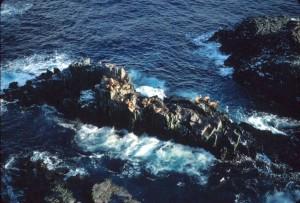 mer, lions, hautes falaises, mer