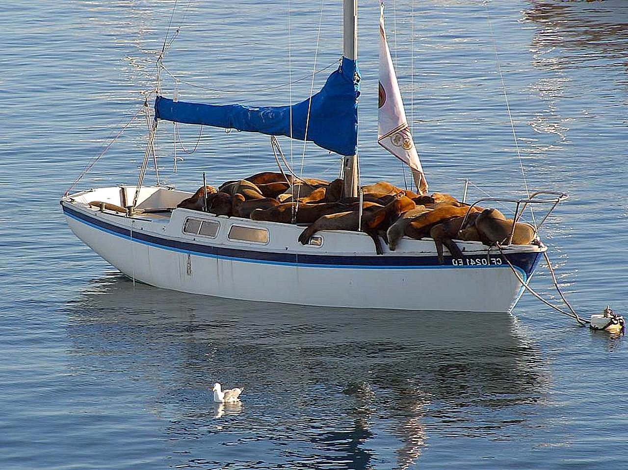 Free Picture Sea Lions Resting Boat