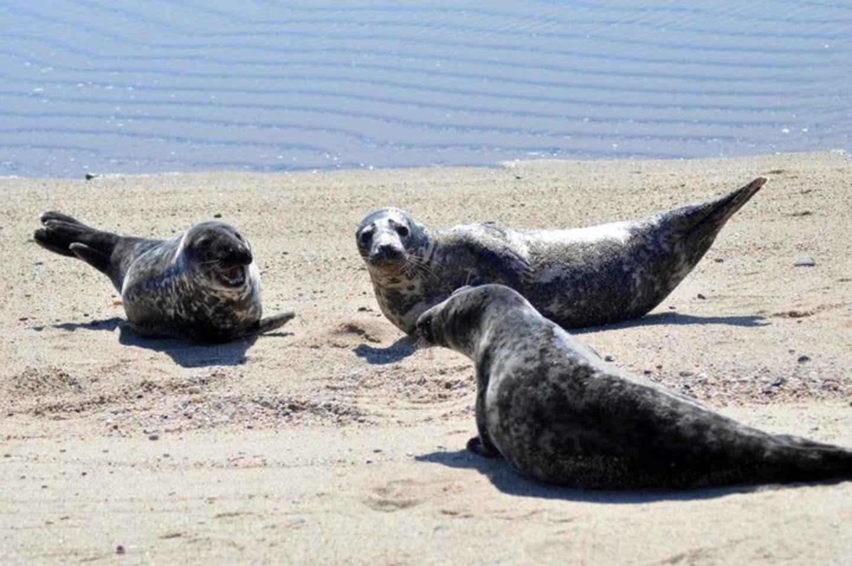 turboimagehost.com imagesize:1440x956 show sea lions, gathered, beach, ocean