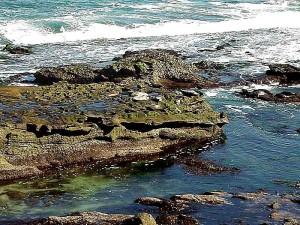 lions de mer, les rochers, l'eau