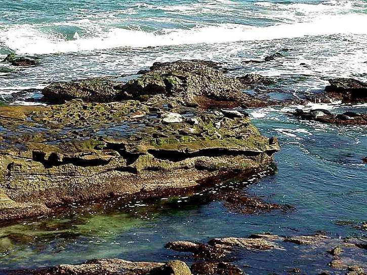 uškatce, skaly, voda