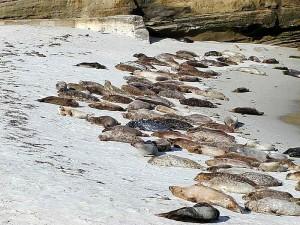 sea lions, sand, beach