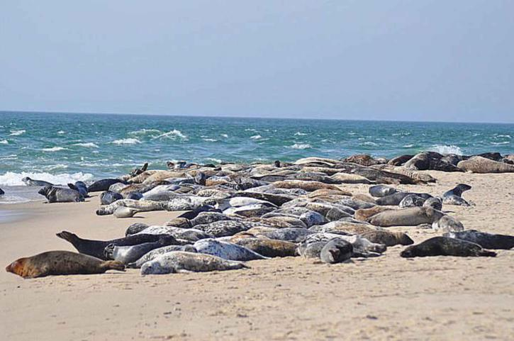 sea lions, sunning, beach