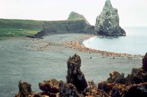 Steller, more, levy, morských cicavcov, eumetopias jubatus