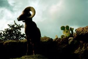 désert, mouflons, moutons, crépuscule