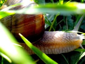 garden, snail, head
