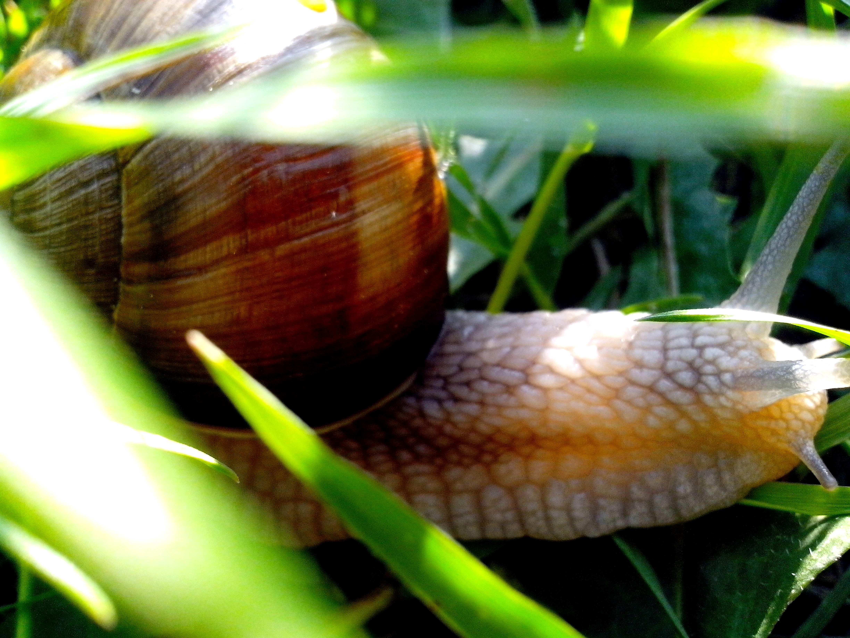 Free photograph; garden, snail, head