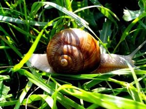 garden, snail, green, grass