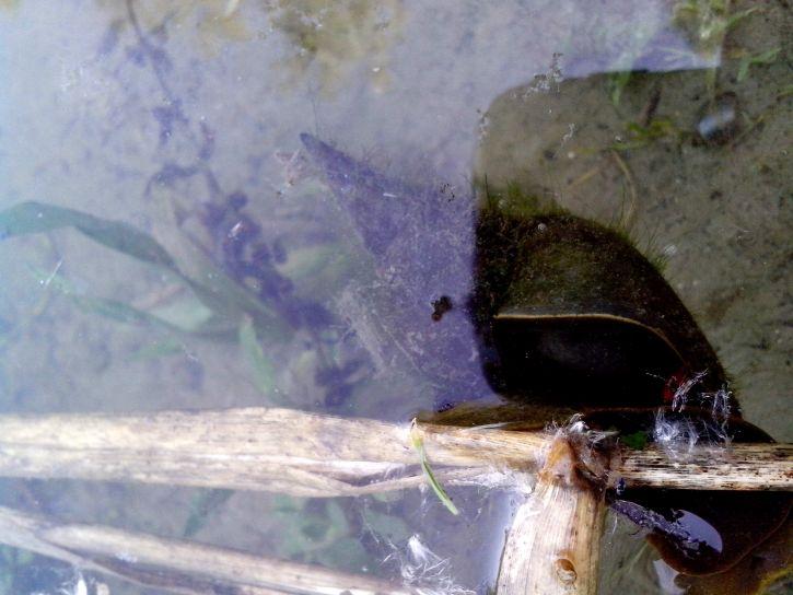 river, snail