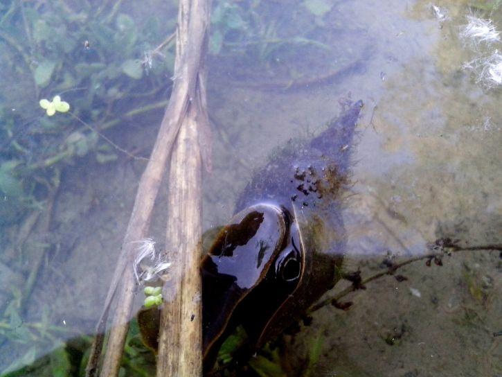 river, snail, water
