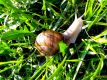 Snail in grass among leaves