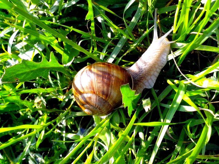 snail, grass, leaves