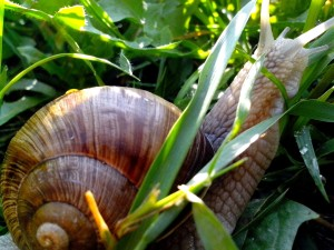 snail, grass, up-close, photo