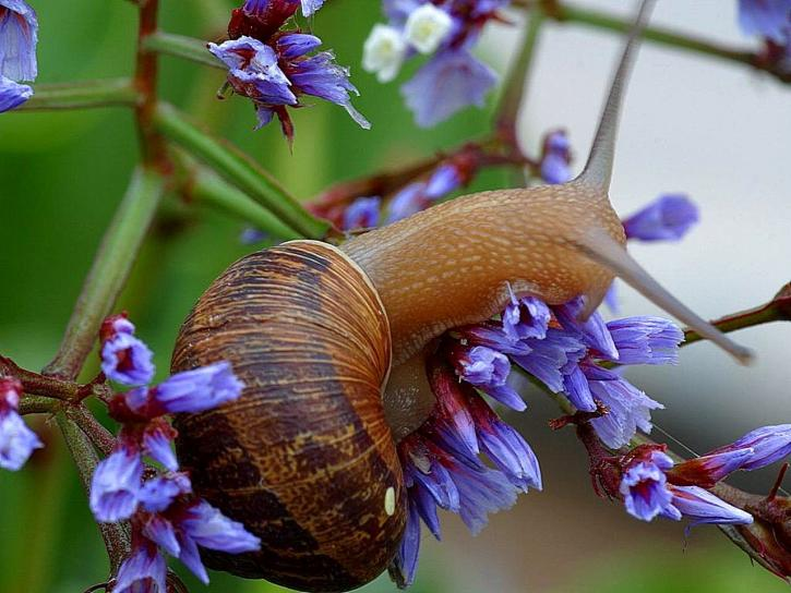 snail, tree