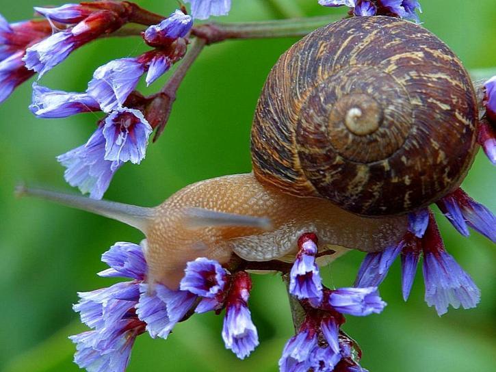 snail, flowers