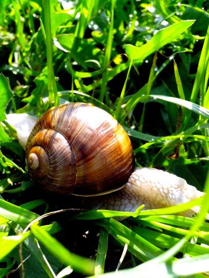 white, brown, garden, snail