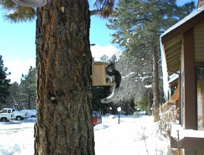veverička, strom, veľké, snehová búrka
