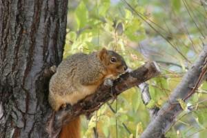 animal, squirrel